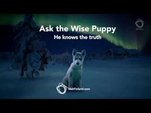 Ask the wise puppy
