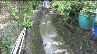 Bắt cá rô phi