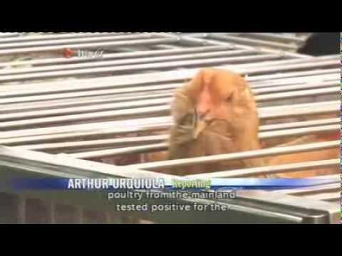 ATV World News (2014/02/19)