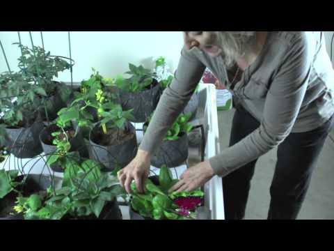 Indoor Hydroponic Vegetable Garden After Just 4 Weeks