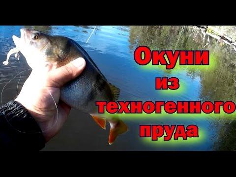 рыбалка на дону на отводной поводок