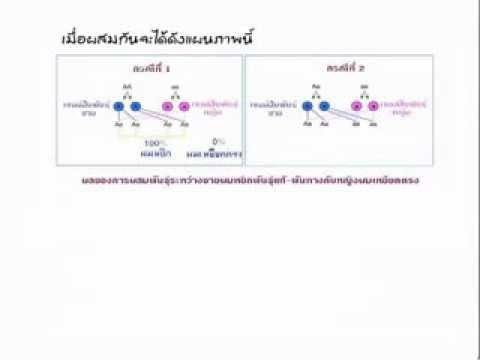 วิทยาศาสตร์ ติว ม.3 สอบเข้า ม.4 การถ่ายทอดลักษณะพันธุกรรม