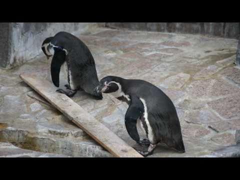 江戸川区自然動物園 2011年3月11日