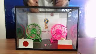 Prediksi Jepang vs Polandia bersama PO si HAMSTER