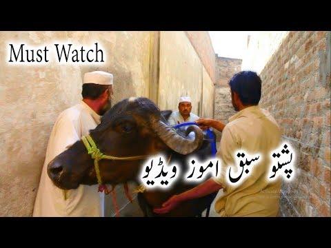 Jumat Oba Pashto Islahi Drama Video New ||  پشتو اصلاحی ڈرامہ ویڈیو thumbnail