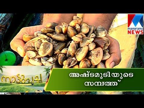 Ashtamudi clam (ashtamudi kakka)| Manorama News|Nattupacha