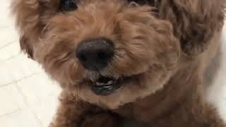 #meme#funny #humor #comedy Cute Pet Animal Funny Moment Happy Time Video 476