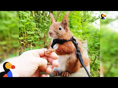 Squirrel Who Falls From Roof Finds Dad Who Won't Give Up on Him - TINTIN | The Dodo