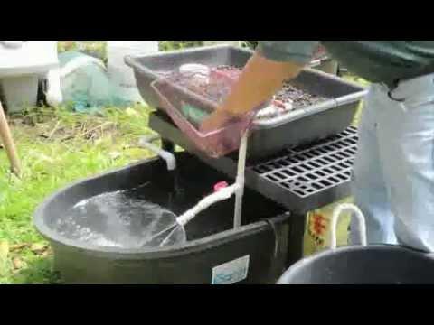 Aquaponics system design fish tank aquaponics youtube for Hydroponic fish tank diy