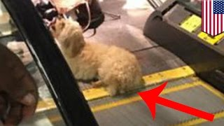 Poor Dog Rescued After Back Paw Gets Stuck In Escalator