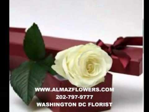 washington DC Florist, florists, DC valentine's day flowers delivery, roses