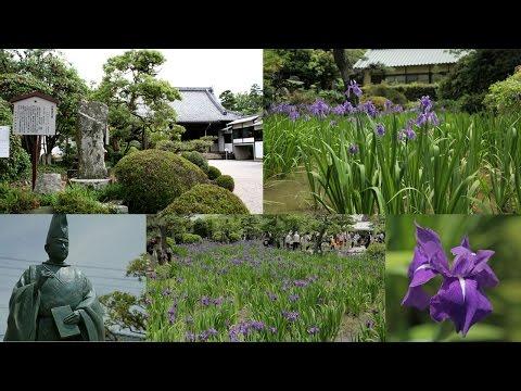八橋かきつばた園(知立市)