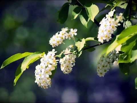 Народные и застольные песни - Соловей