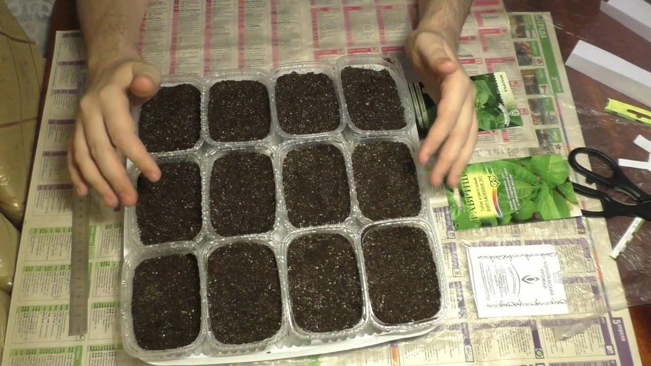 Как вырастить табак в домашних условиях на огороде