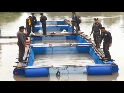 ตำรวจรำมะสักเลี้ยงปลากระชัง  สร้างรายได้เสริม ตามรอยเศรษฐกิจพอเพียง