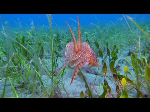 Seagrass ecosystem