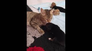 (0.49 MB) A fedakar anne kedinin vahşi köpek yavruları Mp3