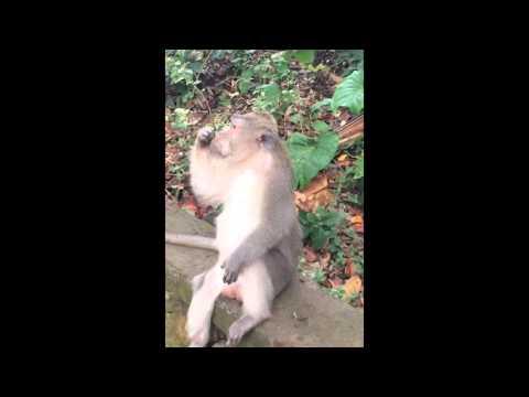 猿が木の枝を使って学習した事とは?