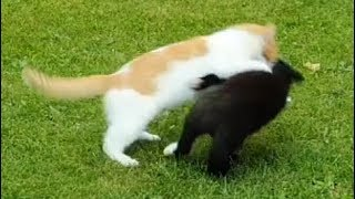 Young cats - friendly fight :-)