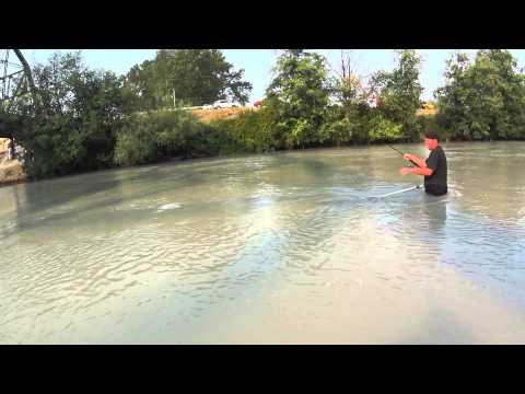 Pink salmon for Puyallup river fishing