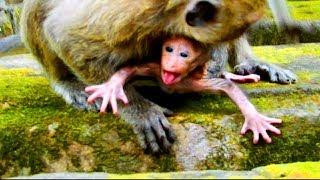 Newborn very angry mum? Why new baby do like this on mum ? Look very strange baby #781