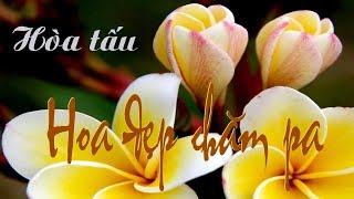 Hoa Đẹp Champa - Hòa Tấu ( Nhạc nền múa )