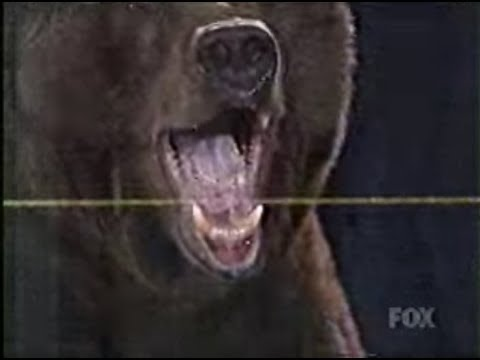 Kobayashi vs Giant Bear