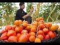 Cómo Volver Cultivos Organicos en Cultivos de Exportación - TvAgro por Juan Gonzalo Angel