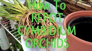 Easy Orchid Care Tips : How To REPOT a root bound CYMBIDIUM ORCHID in under 10 minutes