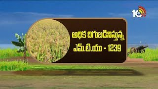 Success Story of New Rice Varieties MTU 1239 | Matti Manishi | 10Tv