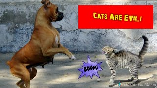 Funny Dog Farts And Slapped By A Cat