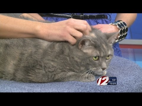Rescue a Pet: Rolly-Polly the Cat