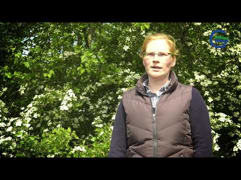 Vegetationsbegleitende Untersuchungen