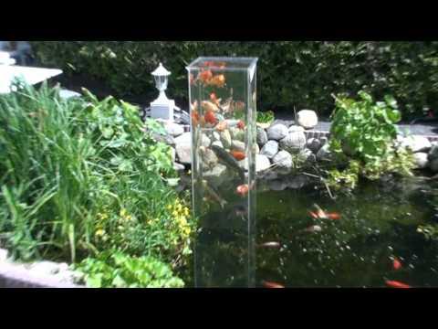 Mein koi aussichtsturm im gartenteich 2 youtube for Gartenteich koi
