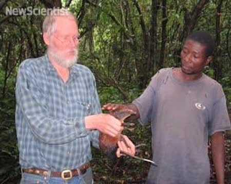 Rabbit-sized 'shrew' discovered