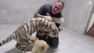 TIGER ATTACKS! CHOKED BY A SNAKE! MY LIFE!! TEN YEARS IN REVIEW!! | BRIAN BARCZYK