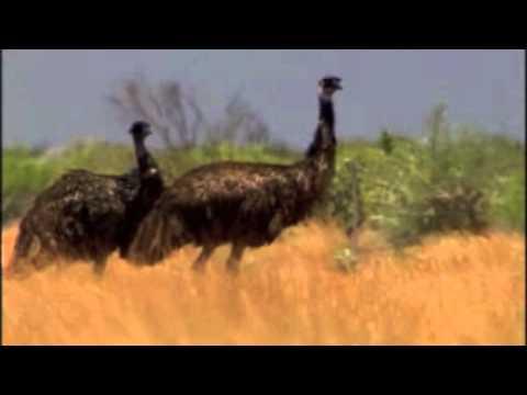 Exmouth - Western Australia Trailer [HD]