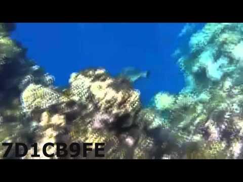 جوال جالكسي اس 5 ضد الماء تصوير تحت البحر شمال ينبع (اللقوق)