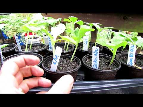 How to Seed Start & Plant Cucumbers, Zucchini & Squash: Setting Up the Planting Hole & More