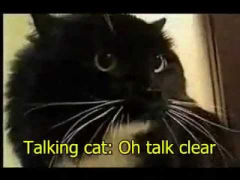 Funny Cat Videos For Cats To Watch