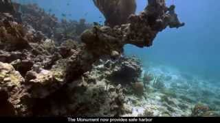 Caribbean Gem: Buck Island Reef National Monument (Short Film, 2014)