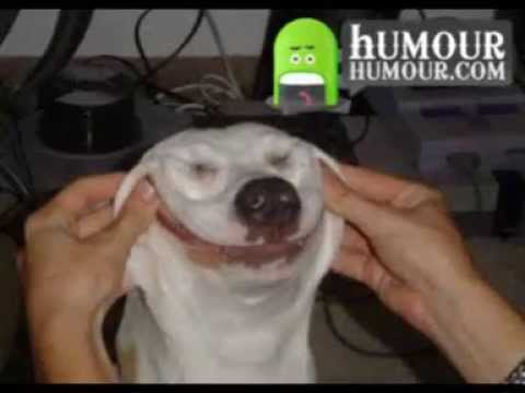 Image animaux trop drole humour youtube - Videos droles d animaux ...