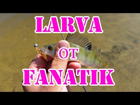 ловля на фанатик ларва видео