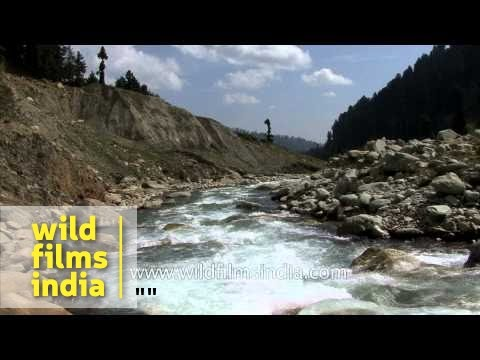 Fresh river water of Kashmir