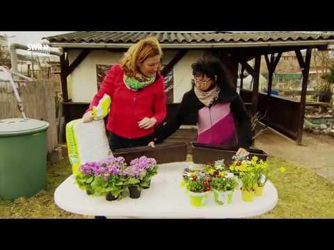 Gartenkalender März: Frühjahrsputz im Grünen