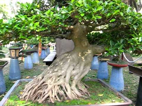 Clip bonsai II Show ( Tao dan Park,Ho Chi Minh City ,Tet 2011, Viet Nam )