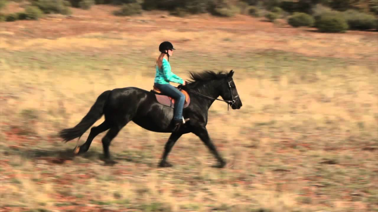 Friesian Horse Galloping Galloping Friesians Extras
