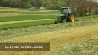 Triticale Cover Crops for Feed and Soil Health