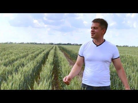 Опыты с пониженными нормами высева пшеницы