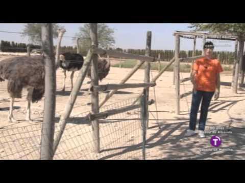 Campo de Oportunidades. Granja de avestruces en Tembleque (Toledo)